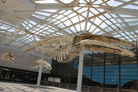 USJ、大阪自然史博物館 244