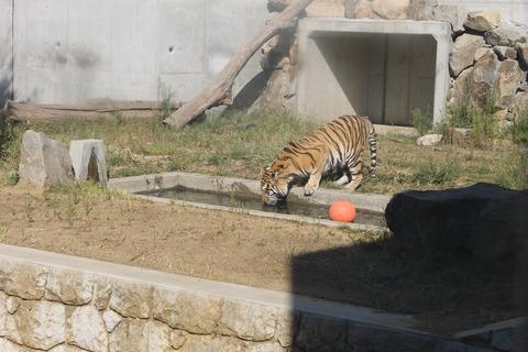 天王寺動物園 161