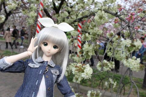 大阪城公園花見 123