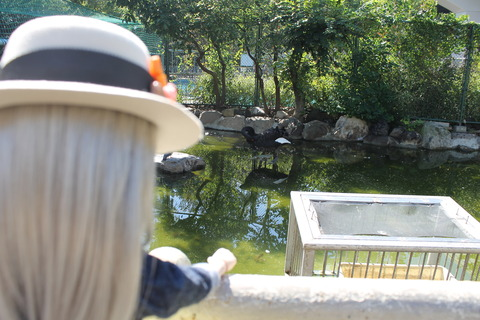 天王寺動物園 053