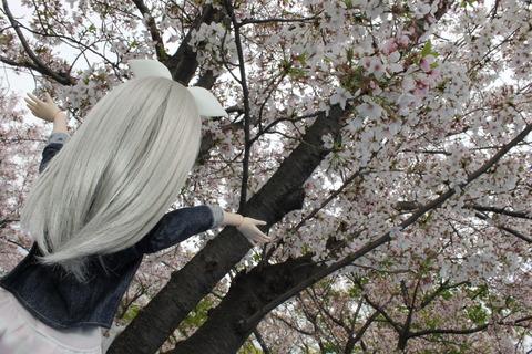 大阪城公園花見 064