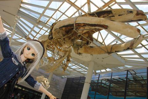 USJ、大阪自然史博物館 248-2
