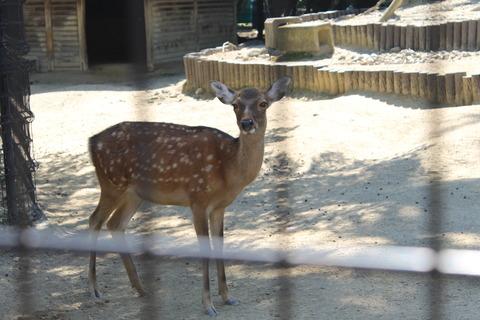 天王寺動物園 111