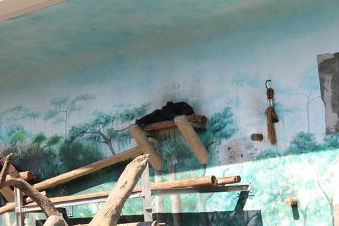 天王寺動物園 038