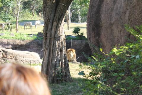 天王寺動物園 171