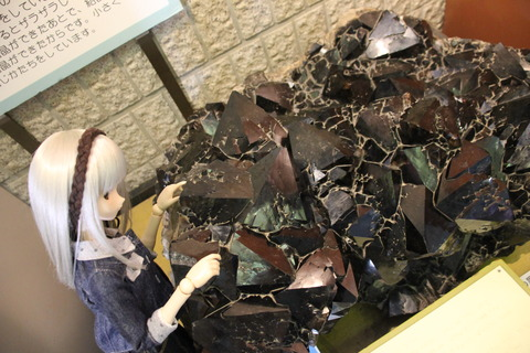 USJ、大阪自然史博物館 388