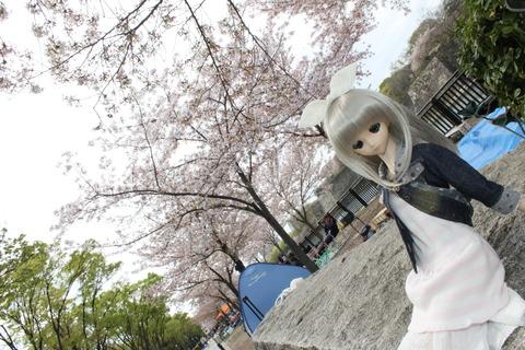 大阪城公園花見 041