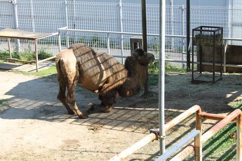 天王寺動物園 129