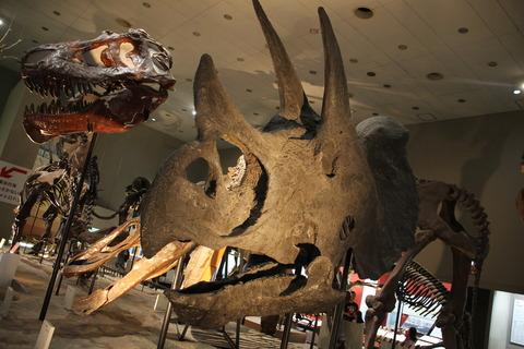 USJ、大阪自然史博物館 341