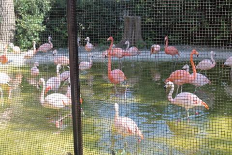 天王寺動物園 021