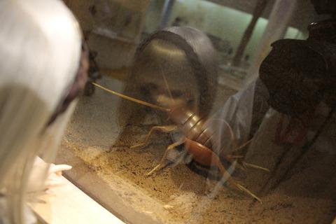 USJ、大阪自然史博物館 426