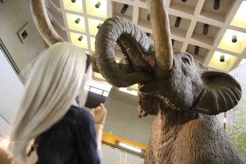 USJ、大阪自然史博物館 261