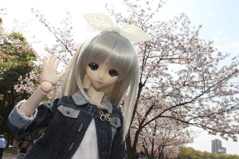 大阪城公園花見 009