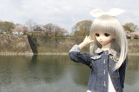 大阪城公園花見 016