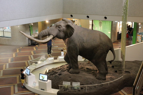 USJ、大阪自然史博物館 380