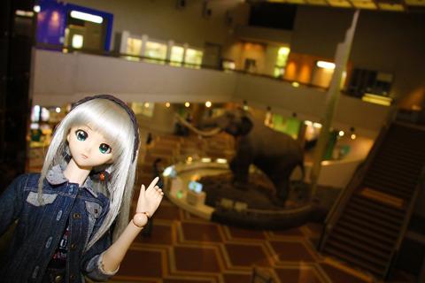 USJ、大阪自然史博物館 383-2