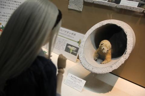 USJ、大阪自然史博物館 281