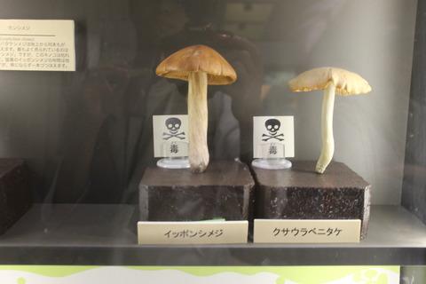 USJ、大阪自然史博物館 374
