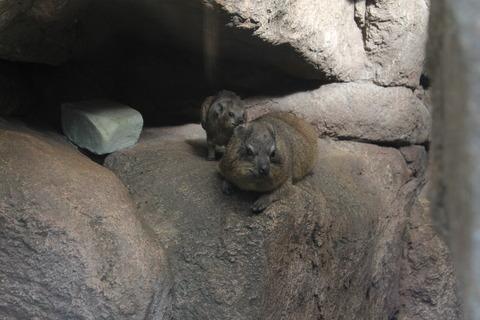 天王寺動物園 174