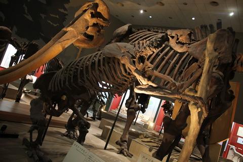 USJ、大阪自然史博物館 323