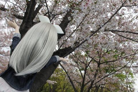 大阪城公園花見 066