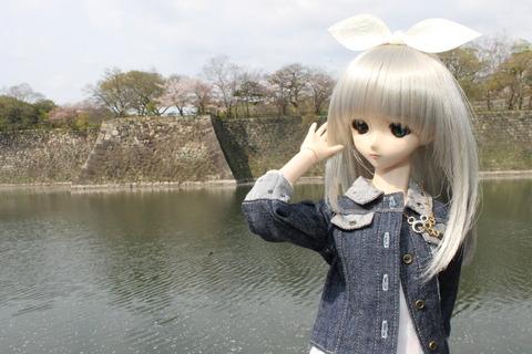 大阪城公園花見 017