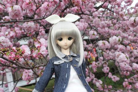 大阪城公園花見 144