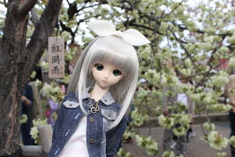 大阪城公園花見 141