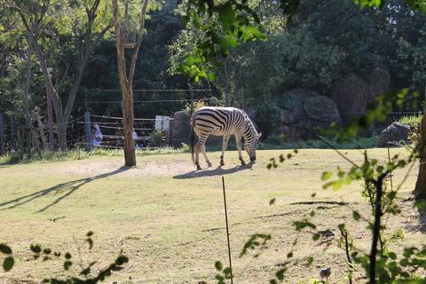 天王寺動物園 166