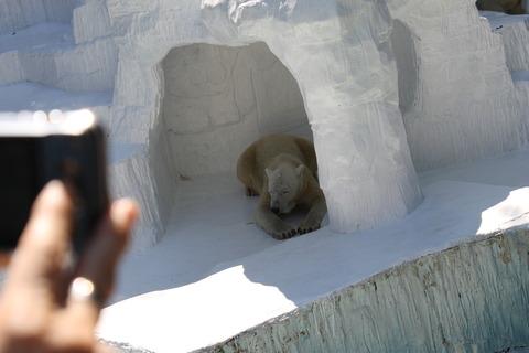 天王寺動物園 071