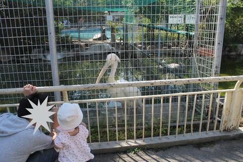 天王寺動物園 045-2