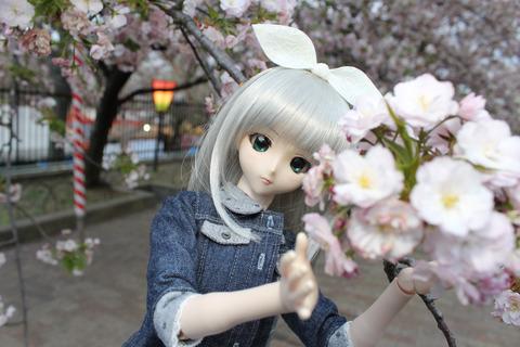 大阪城公園花見 160-2