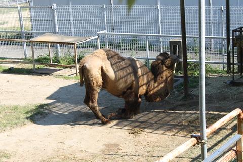 天王寺動物園 128
