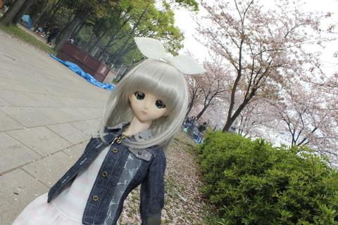 大阪城公園花見 044