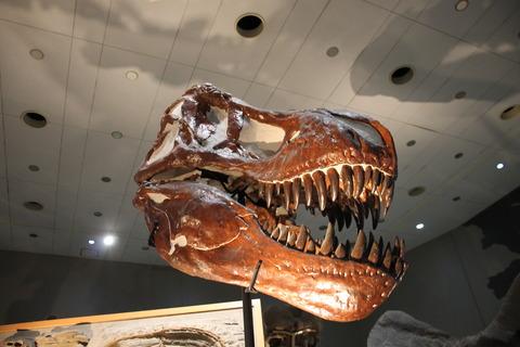 USJ、大阪自然史博物館 349
