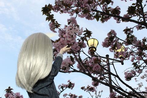 大阪城公園花見 132
