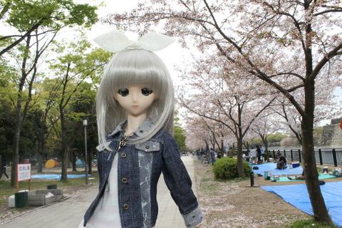 大阪城公園花見 042