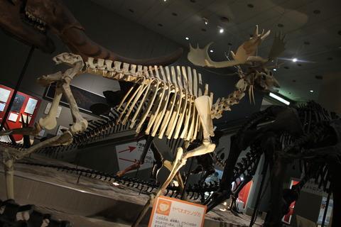 USJ、大阪自然史博物館 322