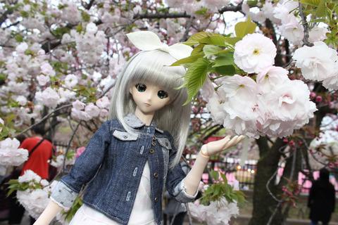大阪城公園花見 138-2