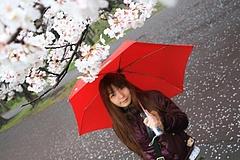 2008桜(るかちゃんと) 022