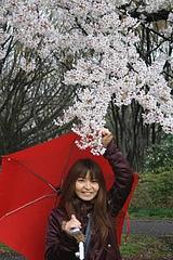 2008桜(るかちゃんと) 017