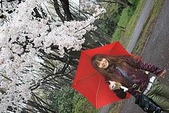 2008桜(るかちゃんと) 018