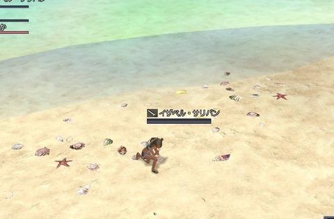 貝殻拾える^^