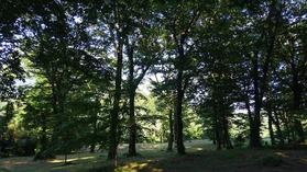 浮布の池の林