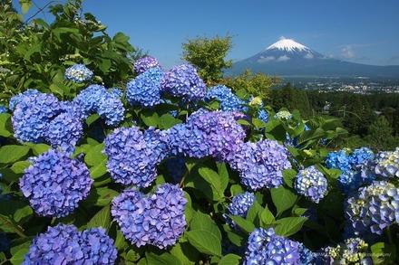 (c) 四季の富士:FUJIYAMA DAYS