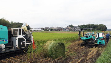 飼料用米の収穫風景