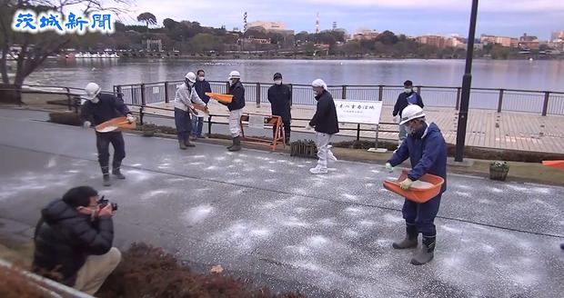 水戸市千波湖における鳥インフレエンザ対策