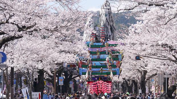 日立平和通りのさくら(2014年4月)
