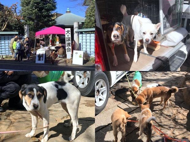 保護犬の譲渡会