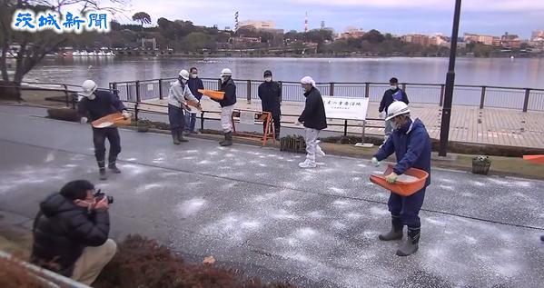 水戸市千波湖での鳥インフルエンザ対策